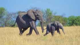 Imagen de archivo de elefantes.