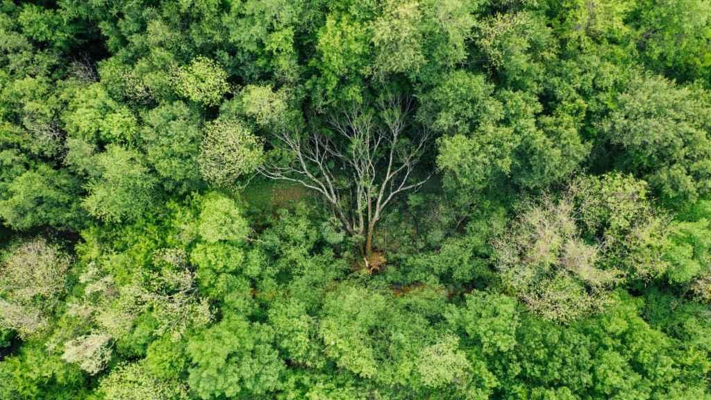 García-Cubillana: Las normativas ambientales están pensadas para crear responsabilidad ambiental en la población