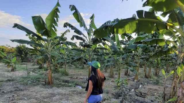 Cultivos tropicales. Foto: Fertirayo.