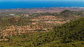Viaje por España en busca del oro líquido
