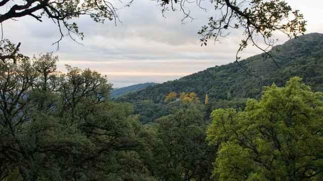 Una imagen del Monte del Duque, en Casares, donde se halla la finca.