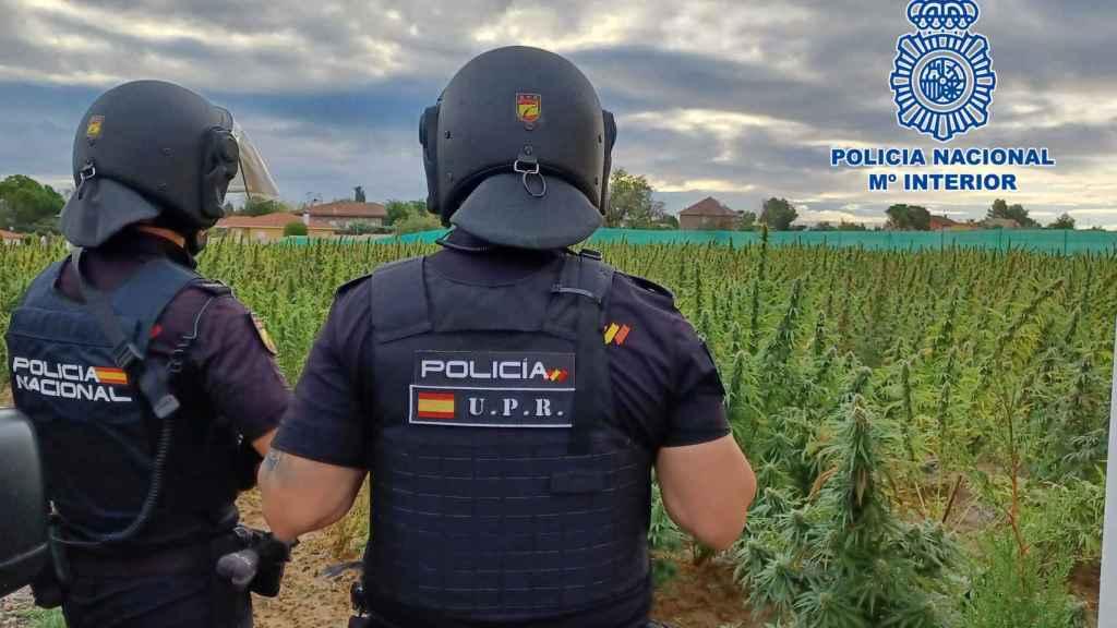 Desmanteladas varias macroplantaciones de droga en la provincia de Toledo