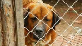 Esta organización sin ánimo de lucro lucha por defender los derechos de los animales.