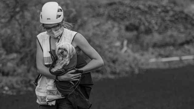 Claudia Rodríguez rescatando a una perra que se encontraba en las faldas del volcán de La Palma mientras cogían muestras de ceniza.