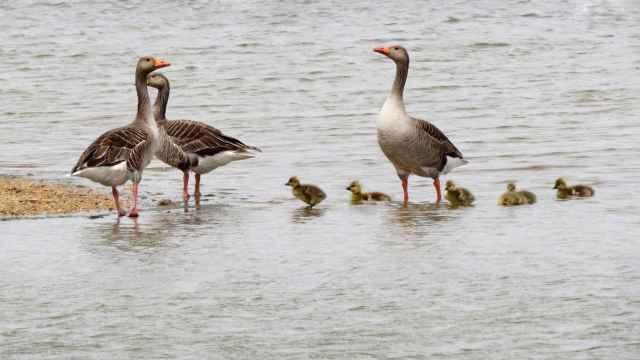 Arribes del Duero, epicentro del Día Internacional de las Aves en Castilla y León