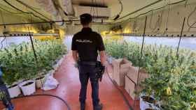 """La Policía Nacional desmantela una nueva plantación """"indoor"""" de marihuana en una nave industrial de Fontanar (Guadalajara)"""