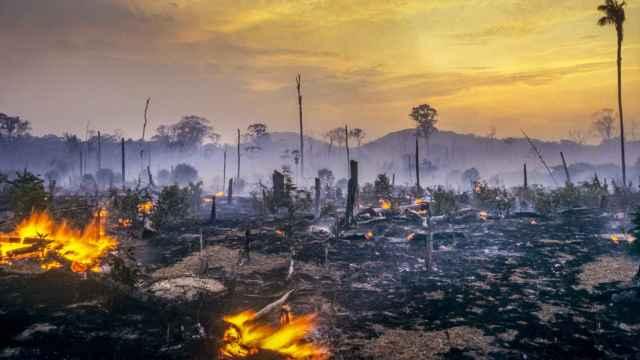 Antes de la elección de Bolsonaro, la deforestación en la Amazonía brasileña había caído sustancialmente desde su pico a principios de la década de los 2000 .
