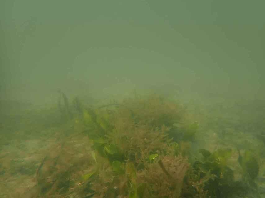 Estado de turbidez que presentaba el agua del Mar Menor este miércoles.