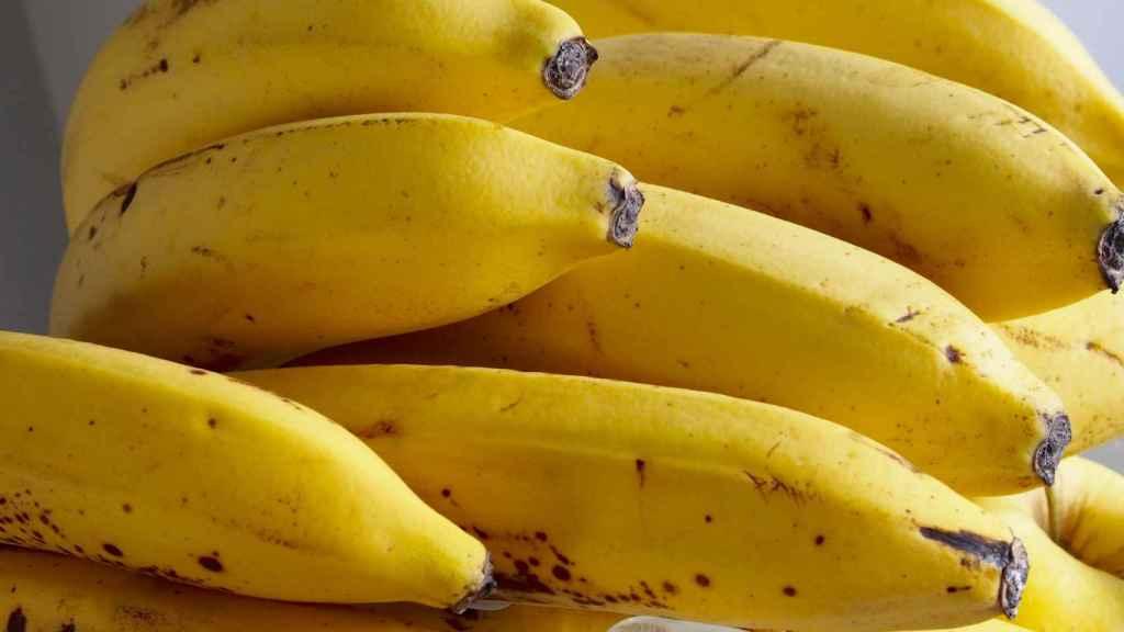 Racimo de plátanos de Canarias.