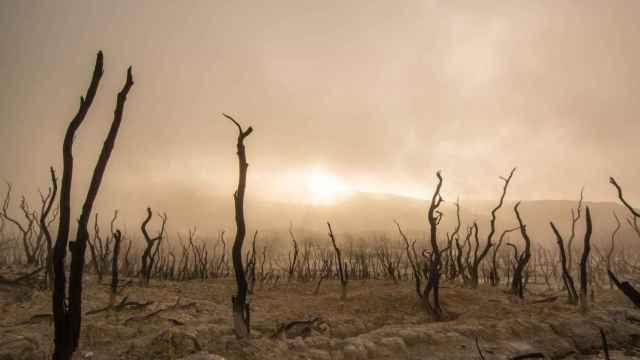 Para el 48% de la Tierra, la evidencia del impacto del cambio climático es robusta o muy alta