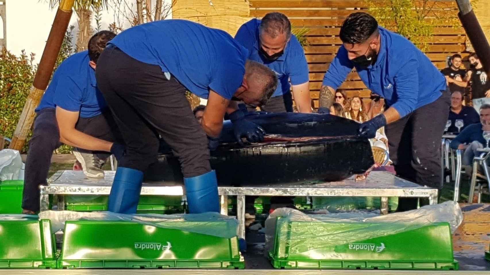 Ronqueo del atún en Valladolid