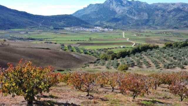 Alfarnate se encuentra rodeada de plantaciones en un paisaje lleno de vida
