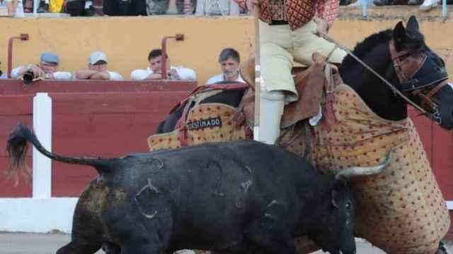 Uno de los astados de El Raso de Portillo demuestra su bravura en el ruedo