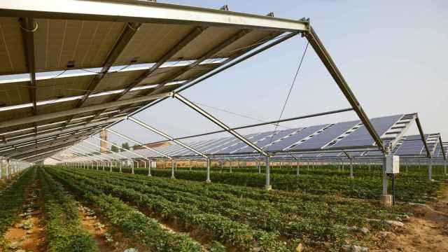 Agrovoltaica, agricultura y energía fotovoltaica de la mano para un campo más limpio y sostenible