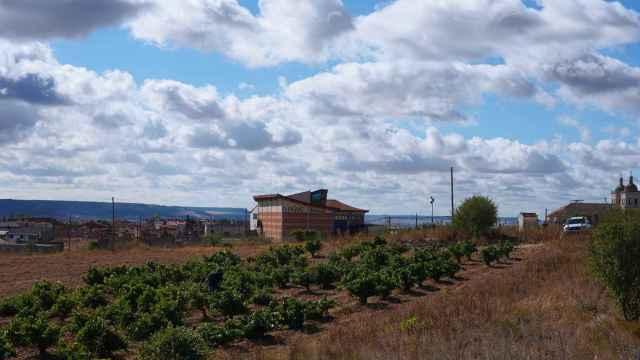 Viñas en Cigales. Fotografía: ICAL