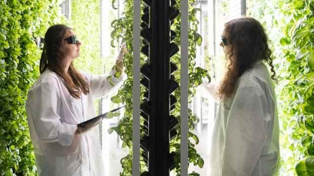 La empresa Groots aspira a que en 2022 sus nuevas plantas con proteína vegetal salgan al mercado.