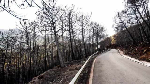 Una de las carreteras afectadas por el incendio de Sierra Bermeja.