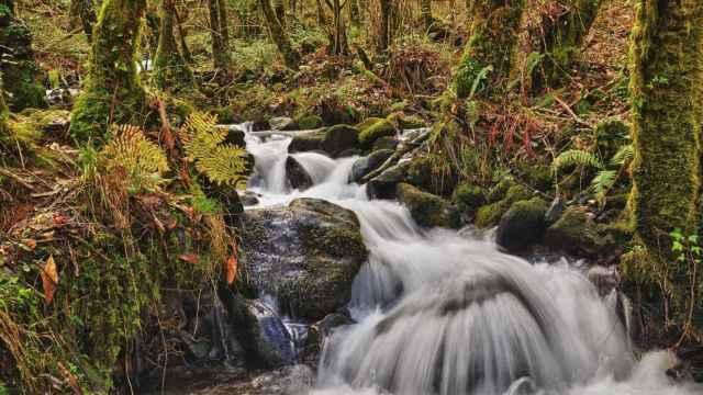 Los mejores bosques en España para hacer Baños de Bosque o 'Shinrin-Yoku'