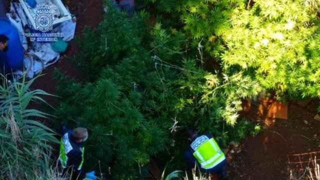 Imagen de la operación antidroga en Ciudad Real. Fotos: Policía Nacional