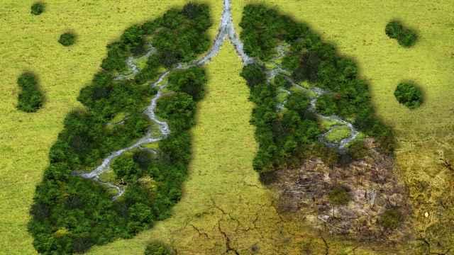 Día Internacional contra el Cambio Climático: los mejores productos para frenarlo
