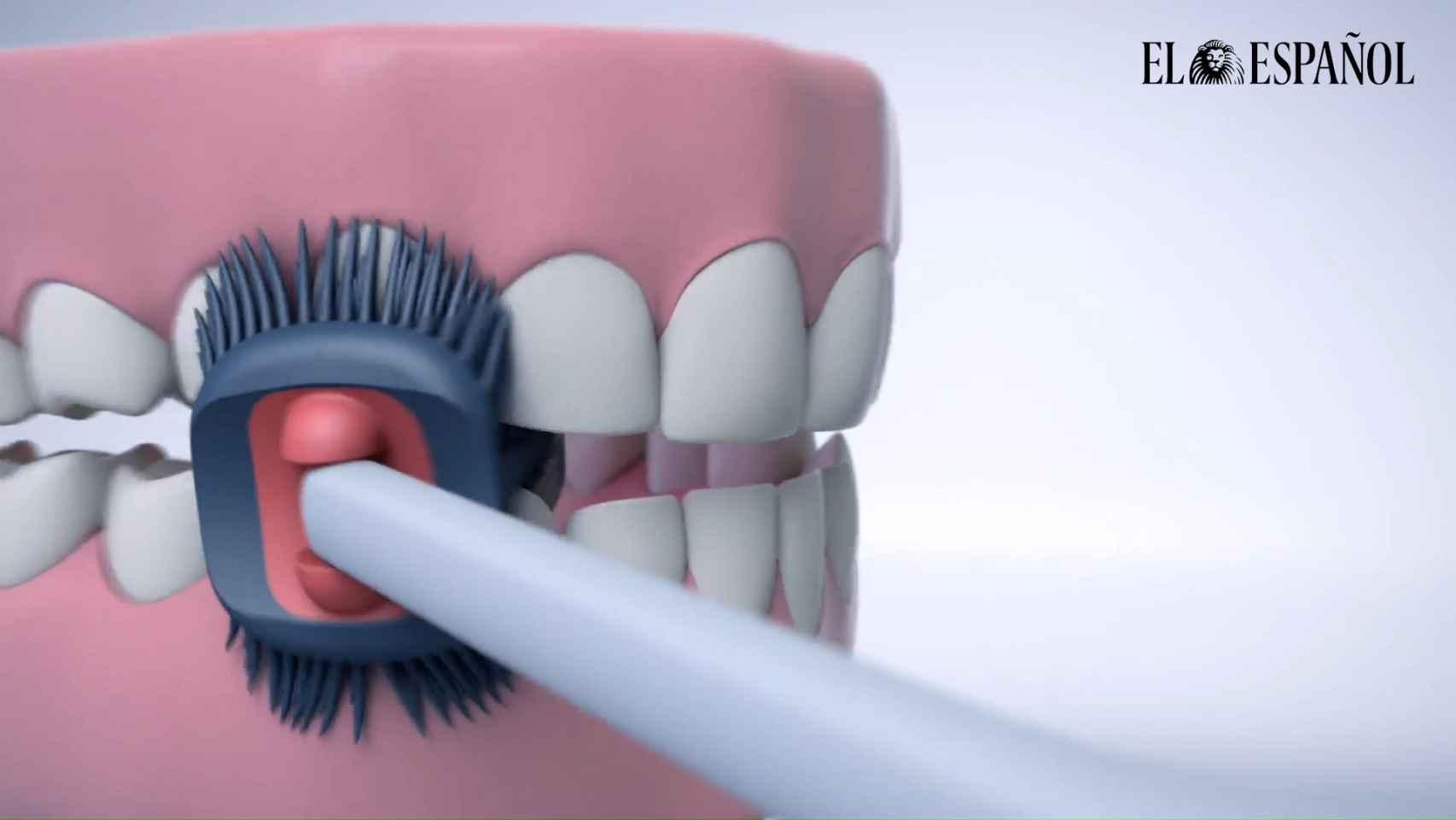 Balene, el cepillo de dientes español que sólo te tienes que pasar una vez
