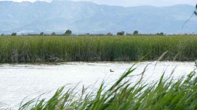 Humedales del Delta del Ebro.