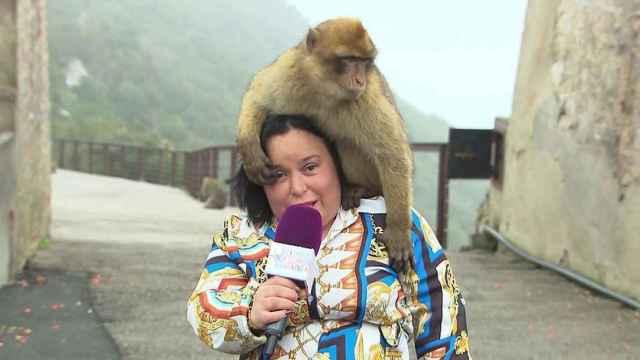 Chiqui lleva más de una década entregándose a Telecinco y a 'Sálvame'.
